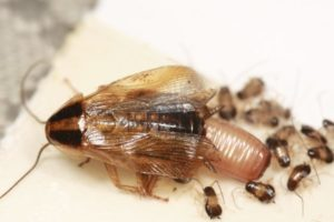 Bugs In Your Car Here S What To Do About Those Freeloaders